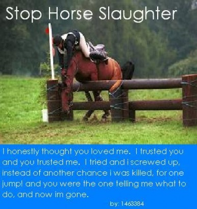 anti horse slaughter essay